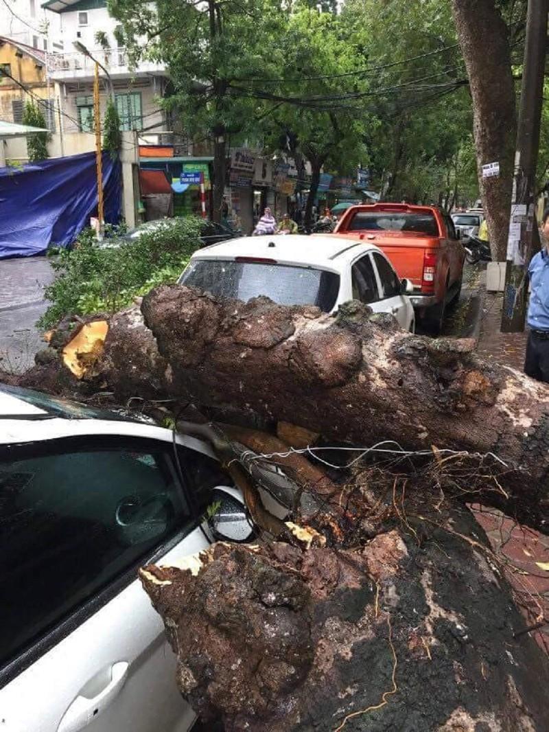 Cây xanh đổ trong mưa, đè ô tô tại Hà Nội  - ảnh 1