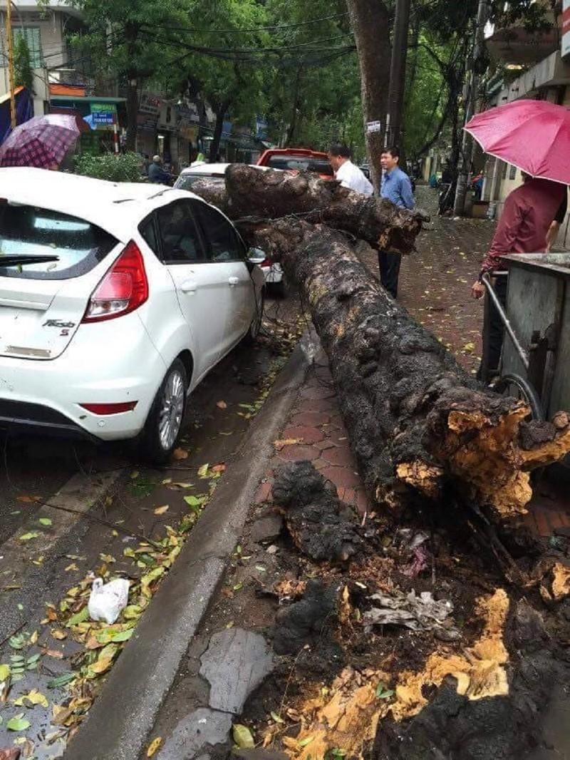 Cây xanh đổ trong mưa, đè ô tô tại Hà Nội  - ảnh 2
