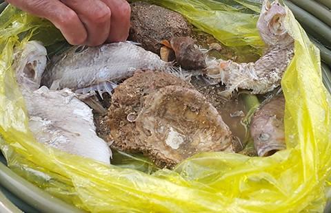 Quảng Bình: Rạn san hô gần bờ đang chết - ảnh 2