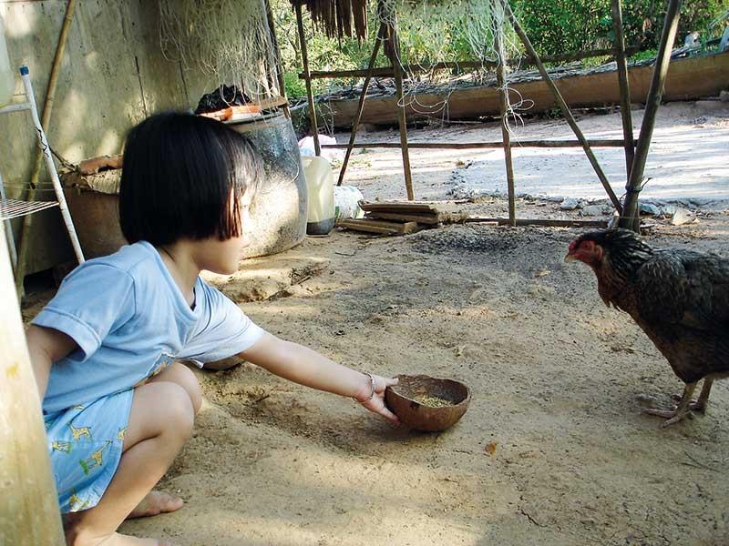 Chuyện con gà và cái tết đầu tiên xa bố - ảnh 2