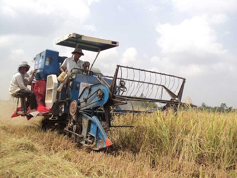 Việt Nam đang 'bao cấp' gạo cho các nước? - ảnh 1