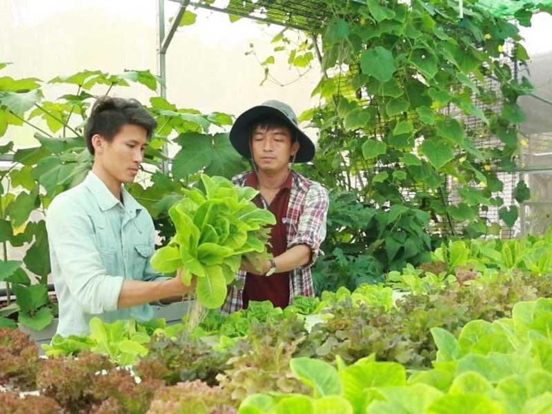 Tạm bỏ nghề đạo diễn để trồng rau sạch - ảnh 1