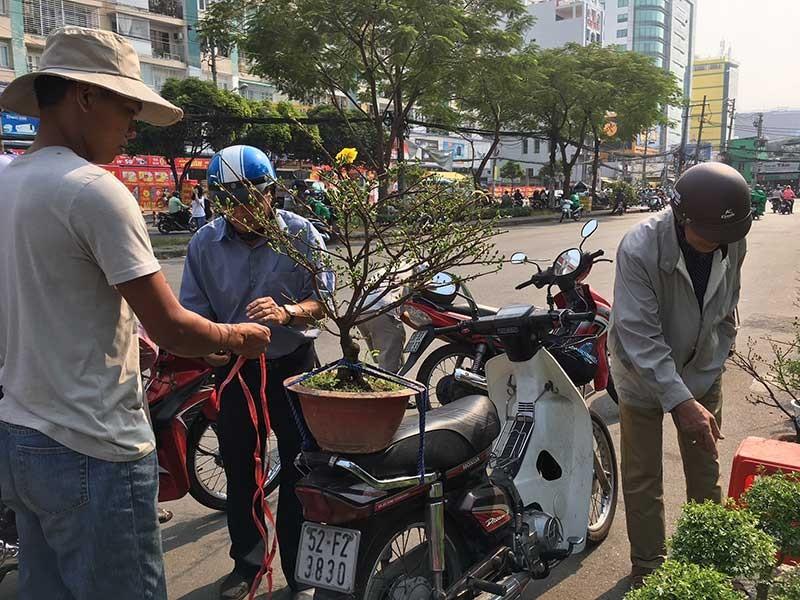 Hoa Tết ba miền hội tụ về thành phố - ảnh 2
