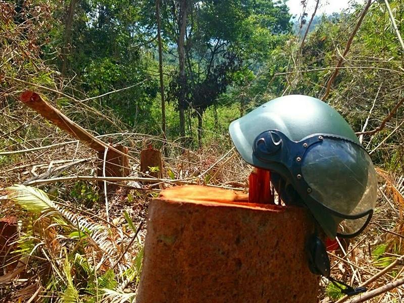 Hơn 5 ha rừng ở đồi Kumagai bị hạ trắng - ảnh 1