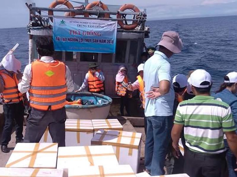Thả ốc hương, hải sâm tái tạo nguồn hải sản ở Lý Sơn - ảnh 1