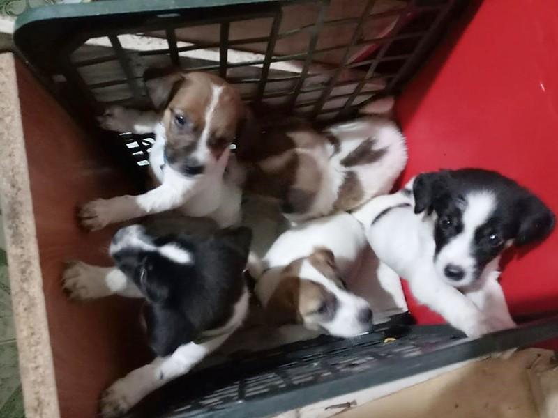 TP.HCM: Nhiều nhóm trộm chó ở Bình Tân - ảnh 1