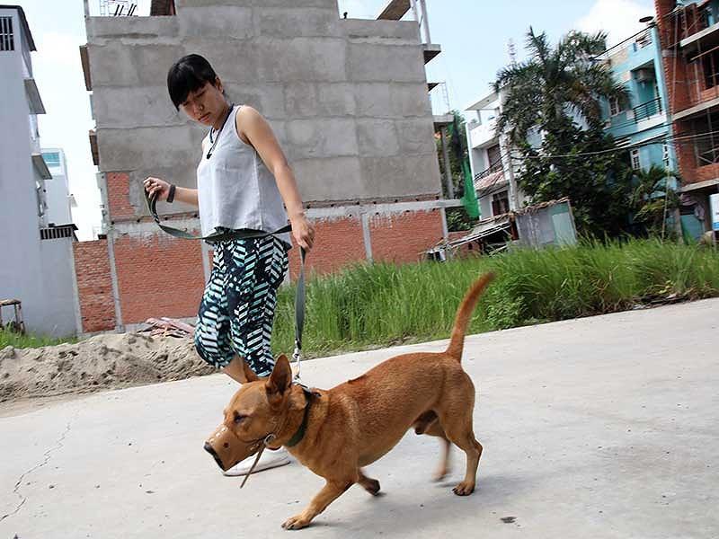 Những quy định người nuôi chó phải biết - ảnh 1