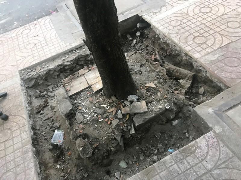 Cây ngã bật gốc do thi công vỉa hè ở Sài Gòn - ảnh 2