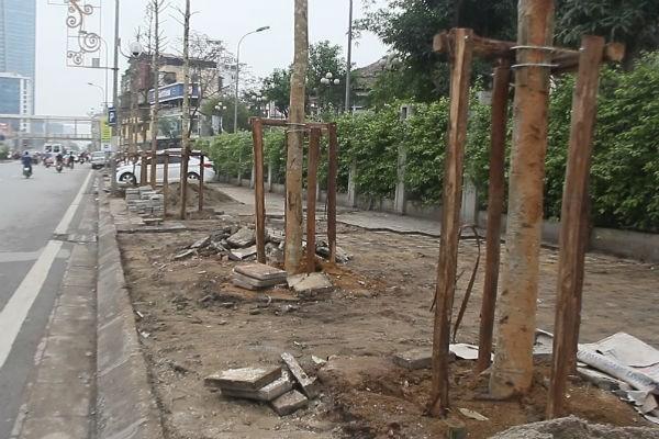 Ai quyết định trồng cây mỡ trên đường Nguyễn Chí Thanh? - ảnh 1