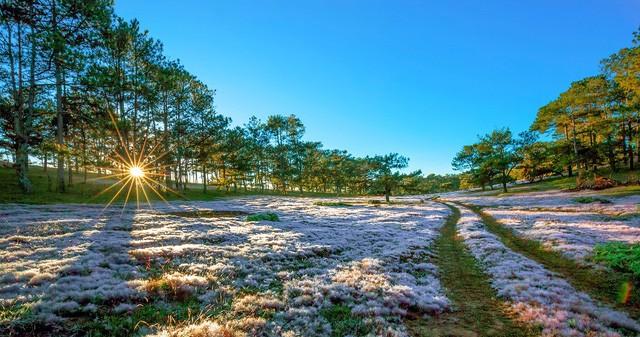 Chiêm ngưỡng mùa cỏ hồng đẹp như tranh vẽ ở Đà Lạt - ảnh 2
