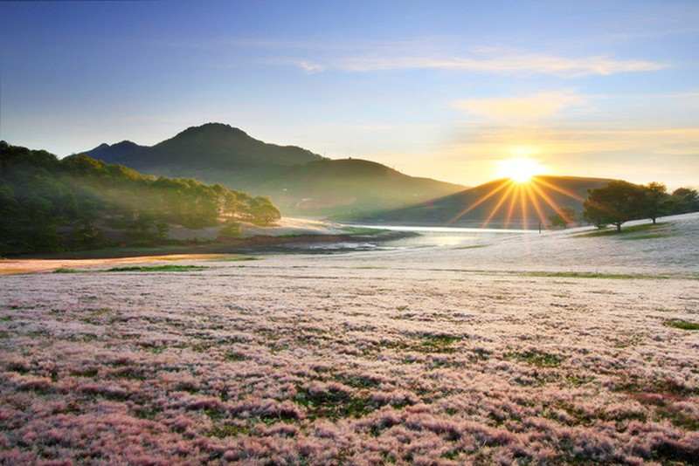 Chiêm ngưỡng mùa cỏ hồng đẹp như tranh vẽ ở Đà Lạt - ảnh 8
