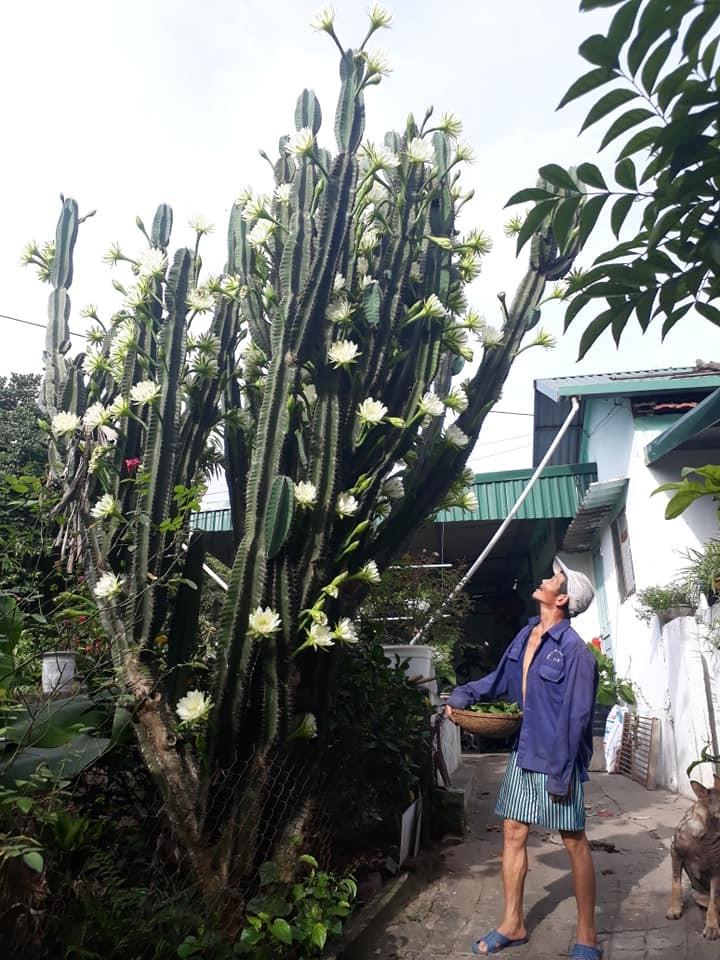 Trầm trồ cây xương rồng 30 năm tuổi trổ kín hoa - ảnh 7