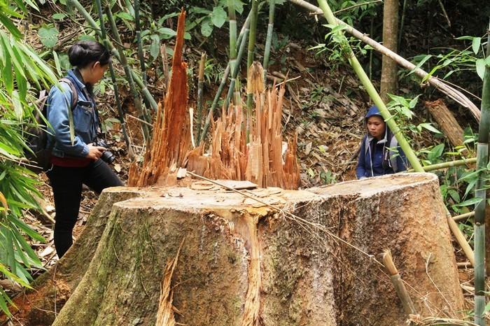 Cách chức Giám đốc Ban quản lý rừng phòng hộ Quảng Nam - ảnh 2