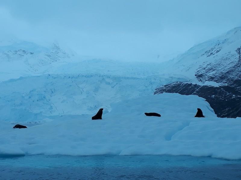 Hành trình chinh phục châu Nam Cực của cô gái Việt - ảnh 6