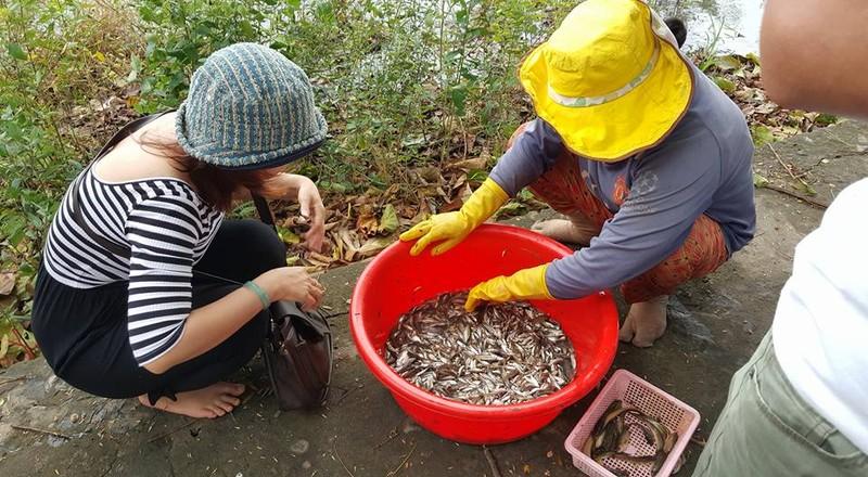 Về An Giang ăn cá linh trên đồng nước nổi - ảnh 10