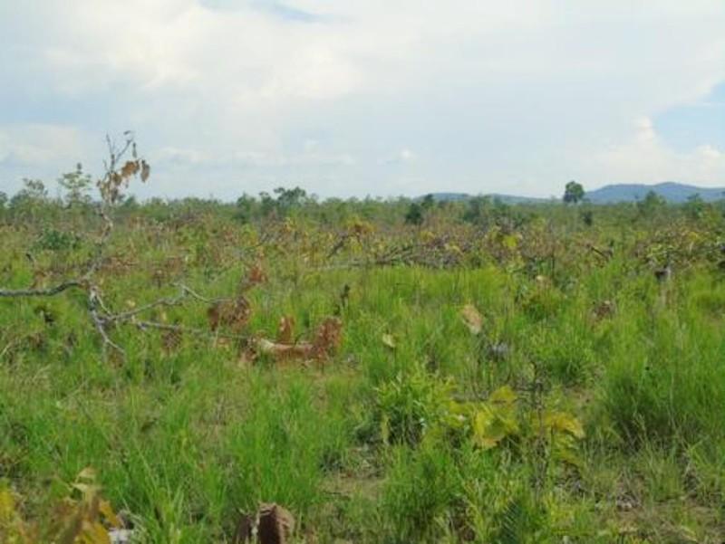 Phát hiện 18 ha rừng sát biên giới bị cắt hạ - ảnh 1