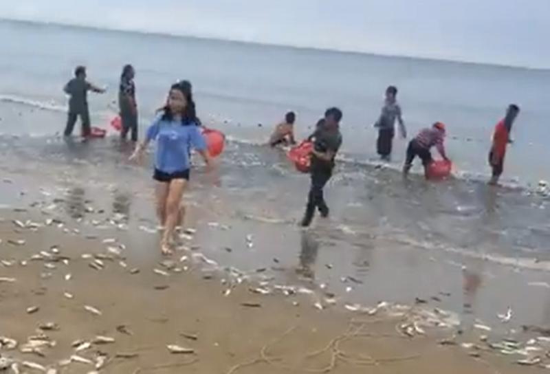 Cá dạt vào bờ biển Hà Tĩnh, dân xúc bán gần 3 tấn - ảnh 1