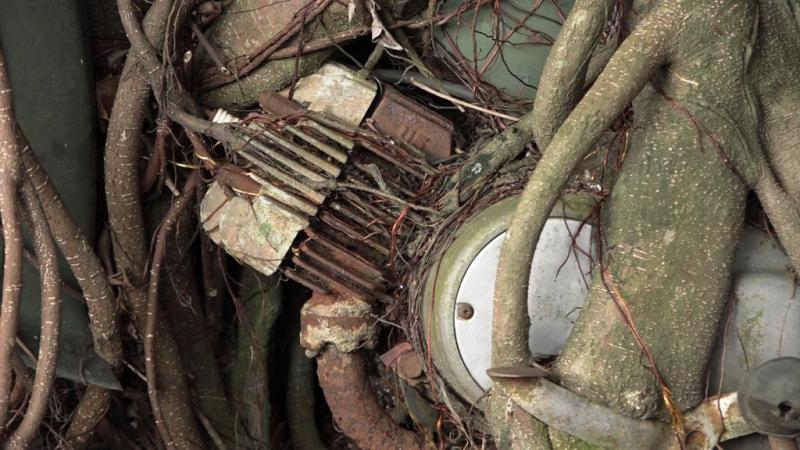 1 cây cổ thụ quấn chặt xe máy hàng chục năm  - ảnh 3