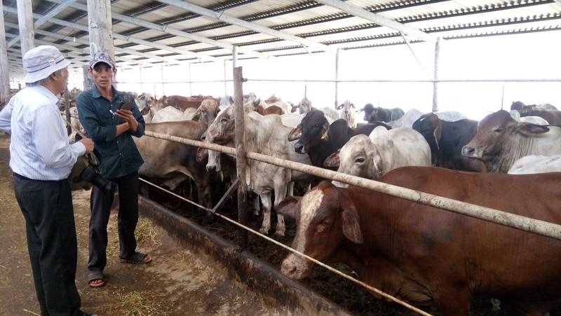 Giám đốc kiếm triệu đô nhờ vỗ béo bò Úc  - ảnh 1