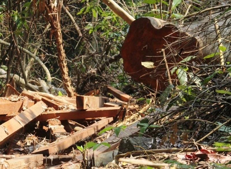 Vụ phá rừng phòng hộ: Xử lý nghiêm - ảnh 4
