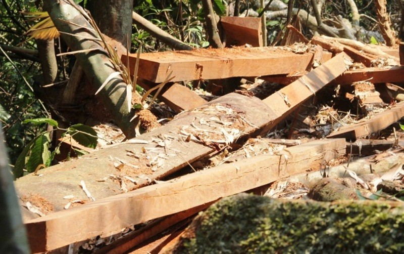 Vụ phá rừng phòng hộ: Xử lý nghiêm - ảnh 3