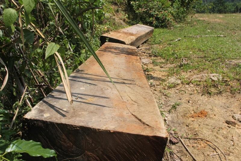 Quảng Nam yêu cầu điều tra rừng phòng hộ bị phá - ảnh 5