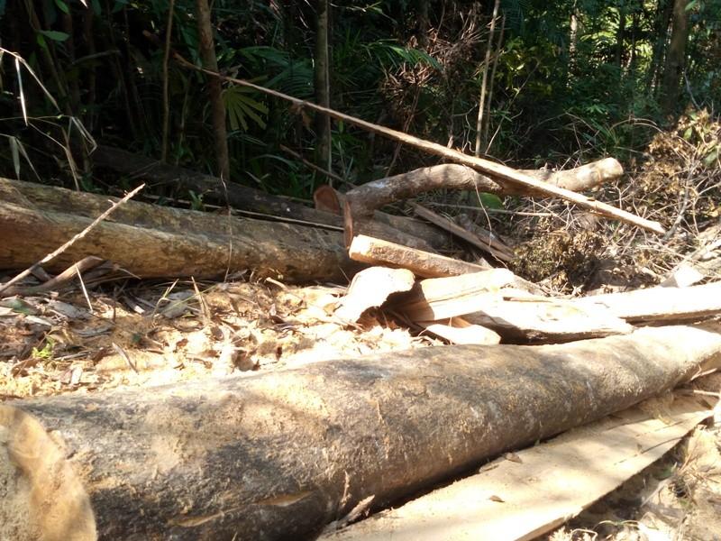 Quảng Nam yêu cầu điều tra rừng phòng hộ bị phá - ảnh 1