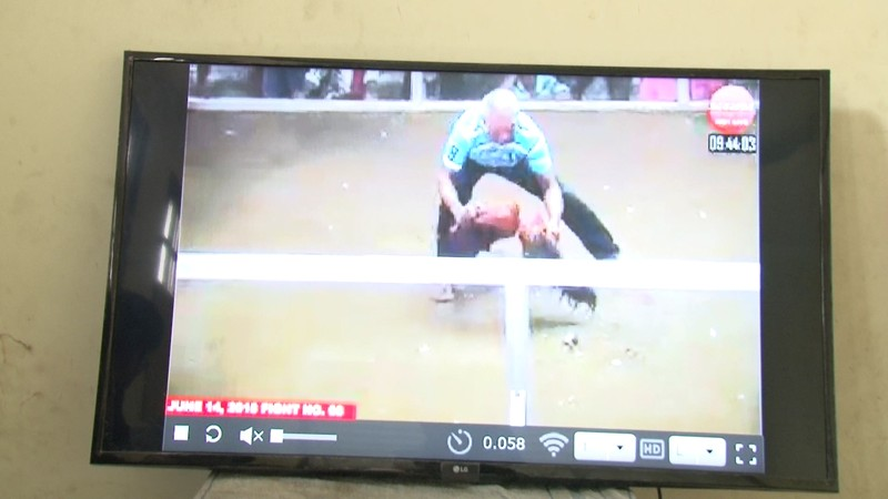 Vĩnh Long bắt 11 đối tượng đá gà qua mạng internet - ảnh 2