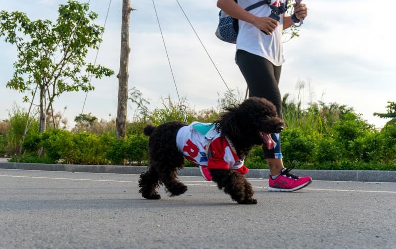 Những hình ảnh ấn tượng ở giải Marathon Quốc tế TP.HCM - ảnh 11