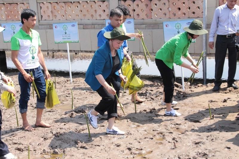 Vinamilk: trồng 100.000 cây xanh, tặng 66.000 ly sữa ở đất Mũi - ảnh 2