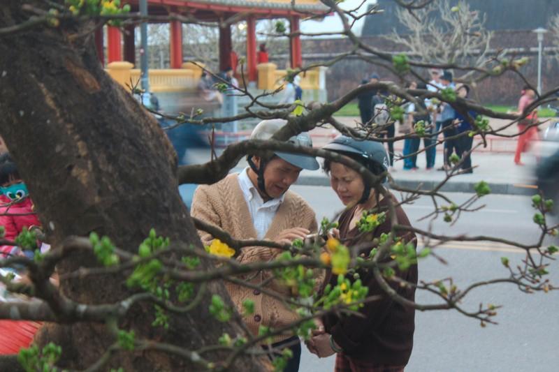 Cây mai tiền tỉ tại chợ hoa xuân ở Huế - ảnh 4