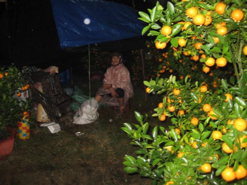 Chủ tịch tỉnh kêu gọi mua hoa giúp nông dân có tết - ảnh 1