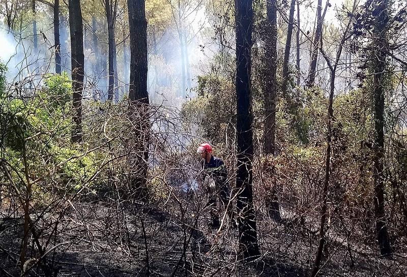 Hơn 200 người dập tắt rừng thông phát cháy  - ảnh 1