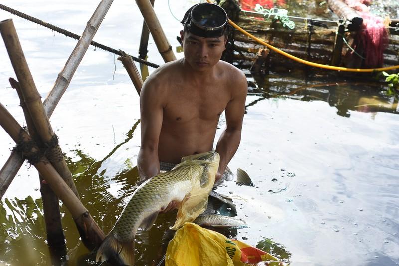 Thủy điện tăng cường xả nước cứu cá trên sông Bồ - ảnh 1