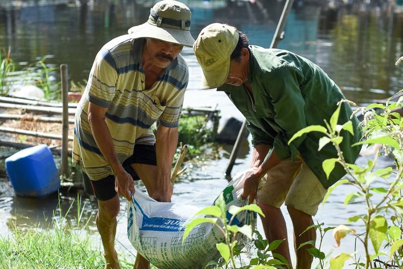 Người dân gạt nước mắt cứu cá lồng trên sông Bồ - ảnh 4