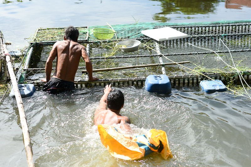 Người dân gạt nước mắt cứu cá lồng trên sông Bồ - ảnh 3
