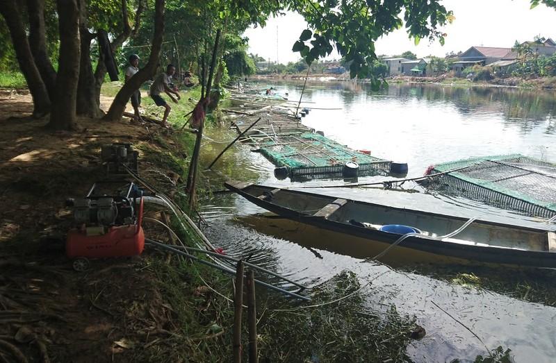 Người dân gạt nước mắt cứu cá lồng trên sông Bồ - ảnh 6