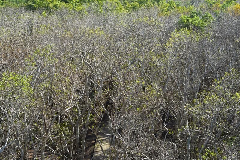 Hút hồn trước vẻ đẹp của rừng ngập mặn xứ Huế mùa thu - ảnh 4