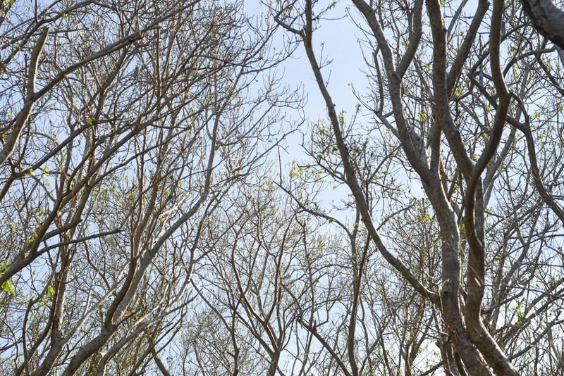 Hút hồn trước vẻ đẹp của rừng ngập mặn xứ Huế mùa thu - ảnh 7