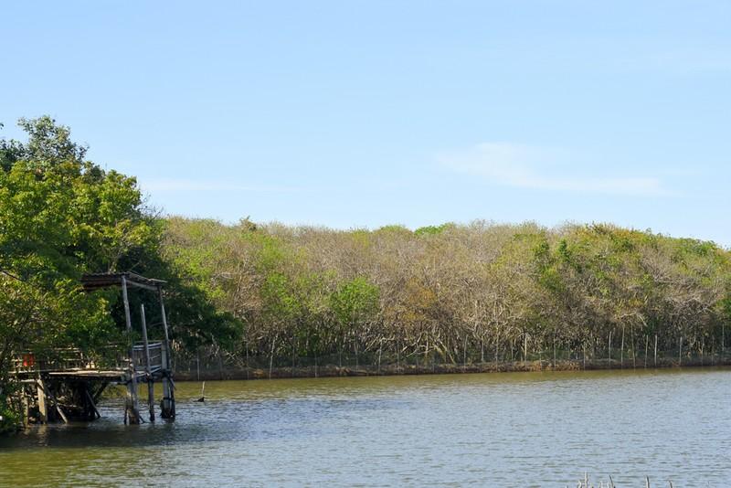 Hút hồn trước vẻ đẹp của rừng ngập mặn xứ Huế mùa thu - ảnh 2