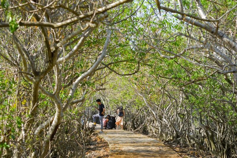 Hút hồn trước vẻ đẹp của rừng ngập mặn xứ Huế mùa thu - ảnh 1