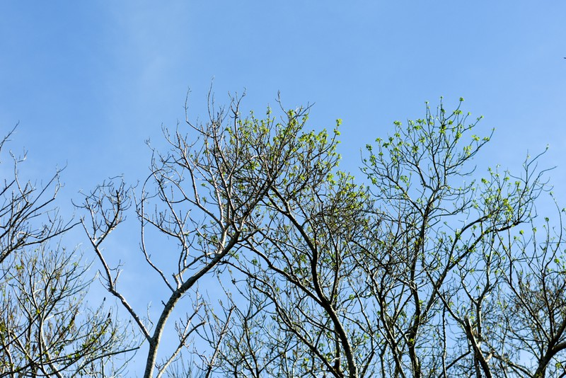 Hút hồn trước vẻ đẹp của rừng ngập mặn xứ Huế mùa thu - ảnh 8