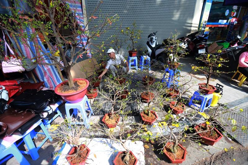 Chợ hoa Hàng Lược nhộn nhịp những ngày giáp Tết - ảnh 3
