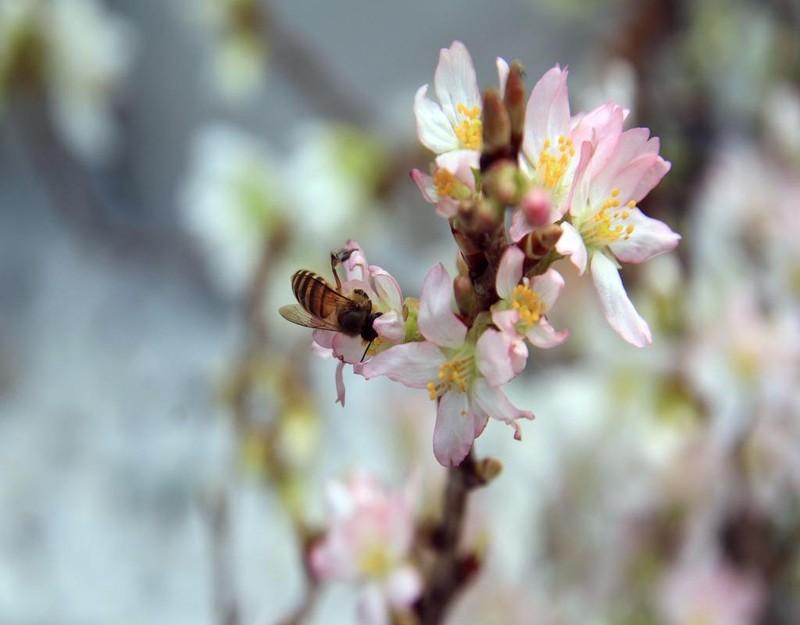 Những cành hoa thu hút các loài ong, bướm...