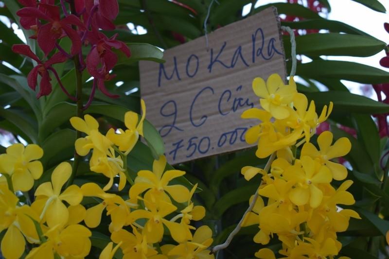 Bến Bình Đông: Hoa tươi, người héo - ảnh 5