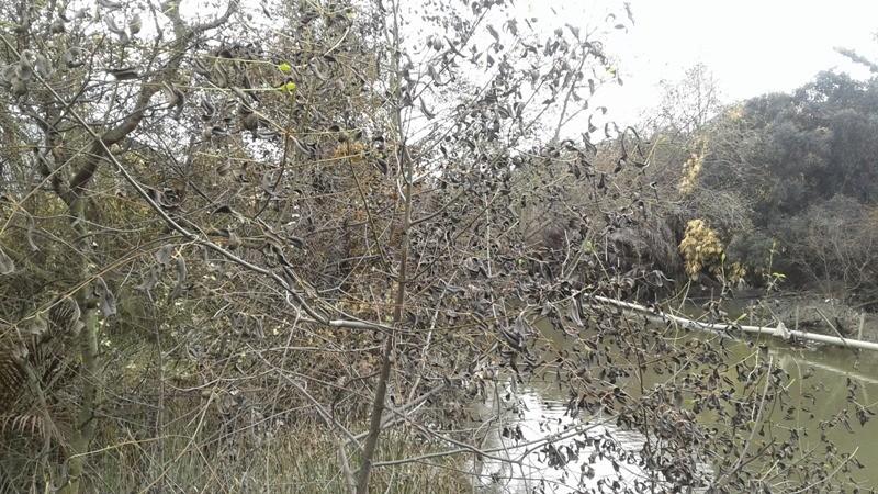Vụ rò rỉ khí amoniac ở Bình Chánh: Dân chưa dám về nhà - ảnh 5