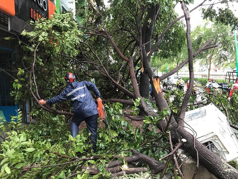 TP.HCM: Mưa gió rất lớn, người đi đường hoảng loạn vì cây ngã - ảnh 1