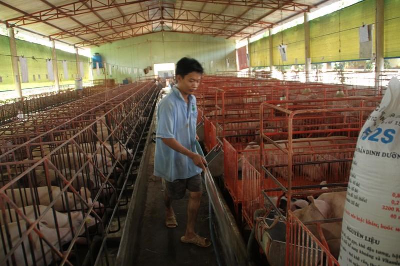 Hàng loạt nông sản Việt 'chết' vì Trung Quốc ngừng mua - ảnh 1