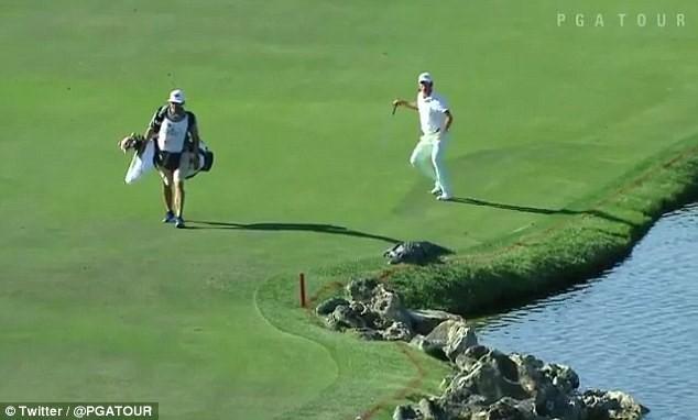 Lạnh người quả bóng golf nép mình cạnh cá sấu khổng lồ - ảnh 5