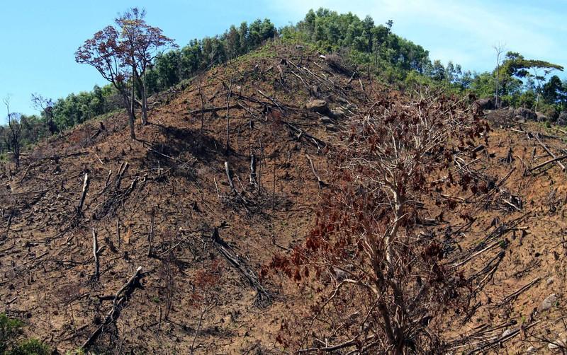 Xem lại mức kỷ luật với kiểm lâm để mất 60 ha rừng  - ảnh 2
